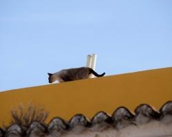 Katt på hett tak ...