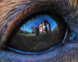 Hundens öga