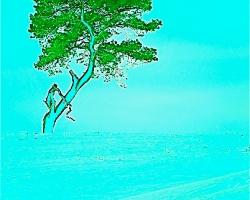 Apeträdet, Haväng, med behandling
