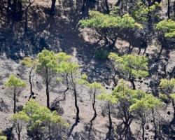 Samma plats, träden är pinjer. Här var det senast utbrott 1677!