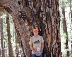 I den stora nationalparken står pinjerna stora