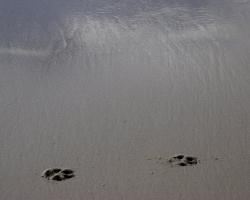 Fotspår i sanden.