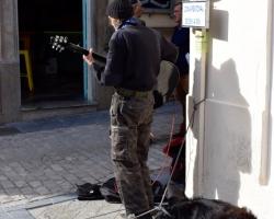 Musikant med hundar