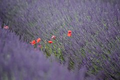 Provence 2018