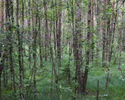 Vackra Store Mosse ger mycket åt trädälskaren