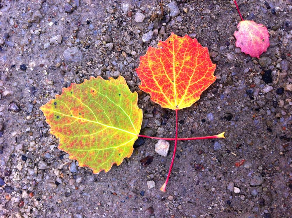 Löv som leker.